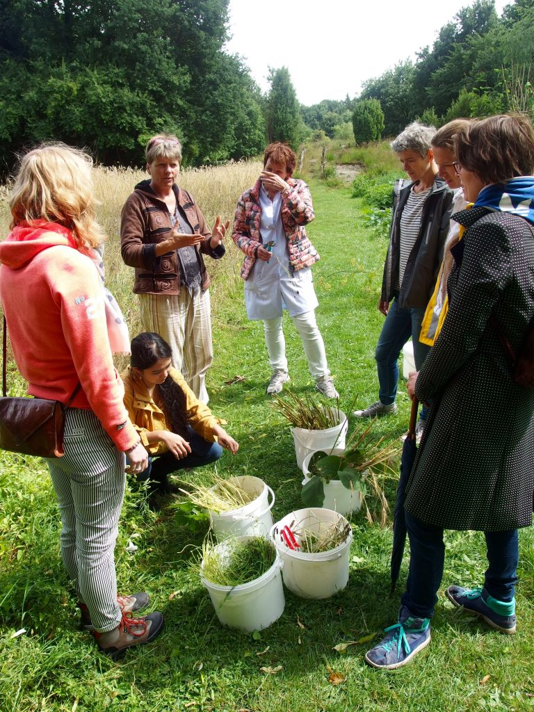 picking plant fibres for papermaking