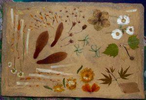 karton van asperge met verzameling plantedelen
